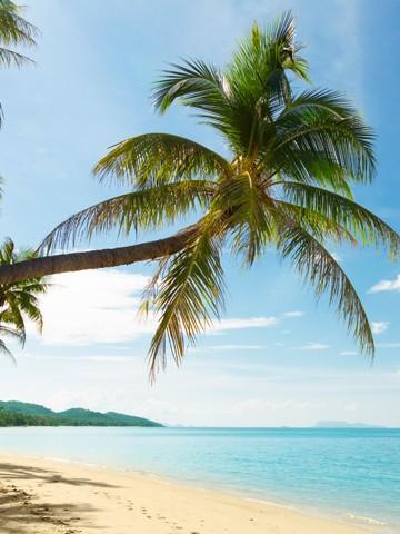 Beach, Vacation Rentals And Monthly Rentals, Hanalei, HI